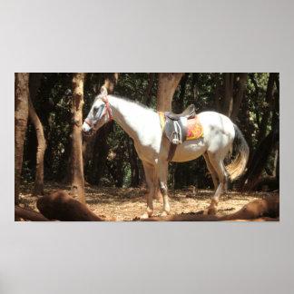 Blanco del caballo póster