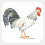 Blanco del gallo con las plumas de cola negras calcomanía cuadradas personalizadas