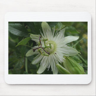 Blanco del Passionflower Alfombrilla De Ratones