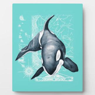 Blanco del trullo de la orca placa para mostrar