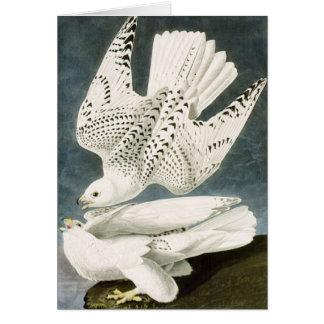 Blanco Gyrfalcons de Audubon Tarjeta De Felicitación