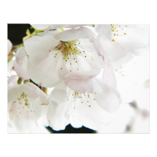 "Blanco hermoso folleto 8.5"" x 11"""
