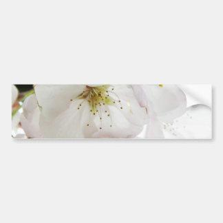 Blanco hermoso pegatina de parachoque