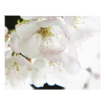 Blanco hermoso tarjetón