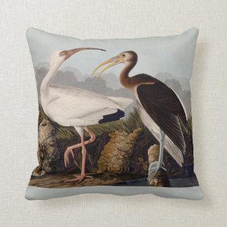 Blanco Ibis de Audubon Cojines