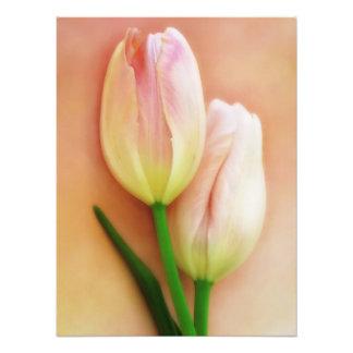 Blanco, melocotón, y fondo de los tulipanes del ro impresion fotografica