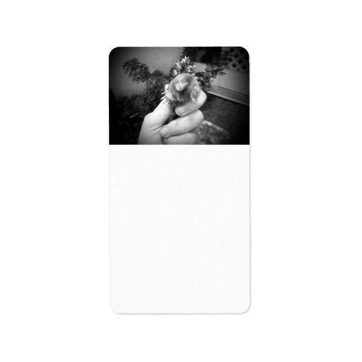 Blanco negro animal sonriente vivo del topo a disp etiqueta de dirección