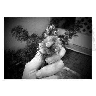 Blanco negro animal sonriente vivo del topo a tarjeta pequeña