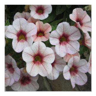 """Blanco rojo de la petunia invitación 5.25"""" x 5.25"""""""