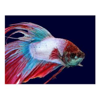 Blanco rojo y azul (los pescados despejan el postal