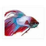 Blanco rojo y azul (pescados en el fondo blanco) postal