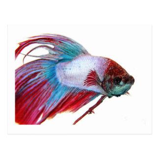 Blanco rojo y azul (pescados en el fondo blanco) tarjeta postal