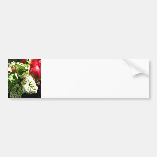 Blanco verde rojo de la planta tropical del Caladi Pegatina Para Auto
