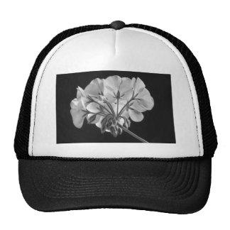Blanco y negro en curso de la flor del geranio gorras