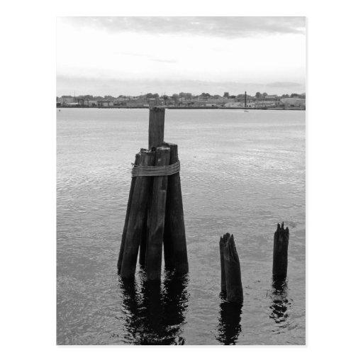Blanco y negro en el río postales