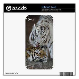 Blanco y reclinación de los tigres de Brown Skins Para iPhone 4S