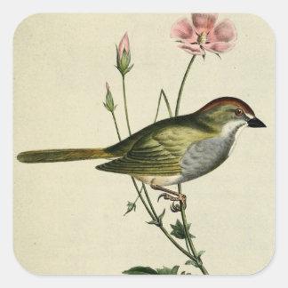 Blandings Finch Square Sticker