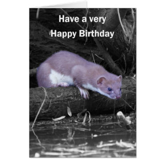Blank Birthday Card With Stoat - Have A Very Happy