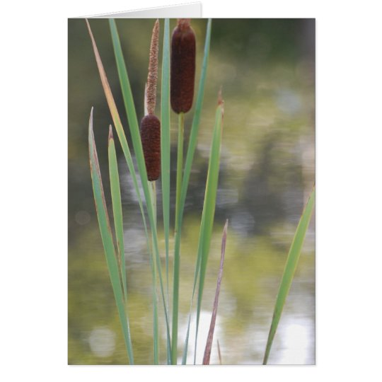 Blank Card - Cattails