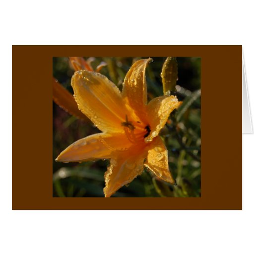 Blank Card - Day Lily