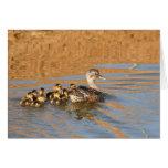 Blank Card, Ducklings