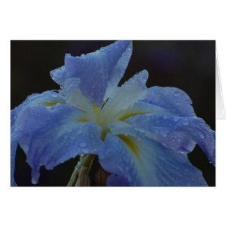 Blank Card - Iris