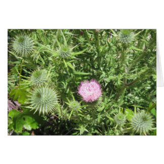 Blank Card, Milk Thistle Flower and Buds Card