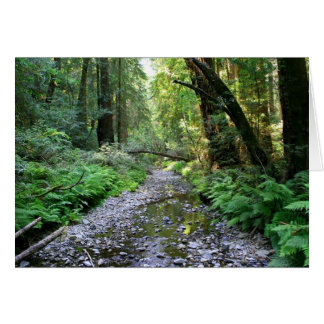 Blank Card, Muir Woods Stationery Note Card