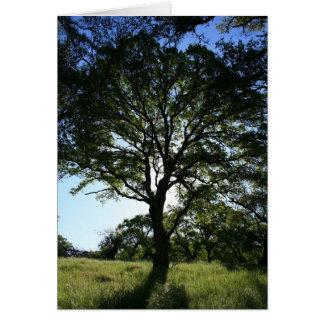 Blank Card, Oak Tree Card