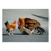 Blank Card, Rooster Card