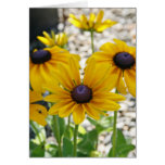 Blank Card, Rudbeckia Flower