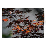 Blank Card - Sunlit Leaves