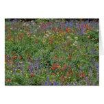 Blank Card - Wildflowers