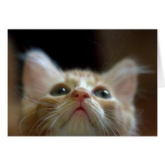 Blank Card with Adorable Orange Tabby Kitten