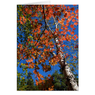 Blank Card with Aspen Tree in the Fall