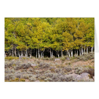 Blank Card with Aspen Tree in the Falls