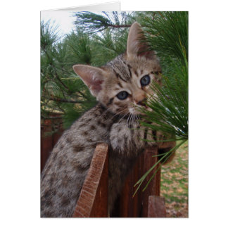 Blank Card with Savannah Cat Kitten Background