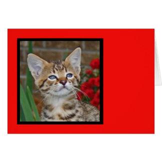Blank Card with Savannah Cat Kitten Background