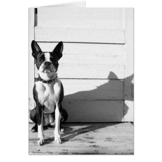 blank dog notecard card