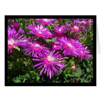 Blank Greeting Card: Fuchsia Ice Plants Large Greeting Card
