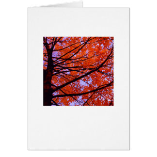 Blank greeting card, photo on front card