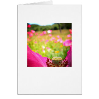 Blank greeting card, photo on front. card