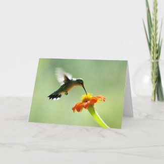 Blank greeting card with hummingbird and flower