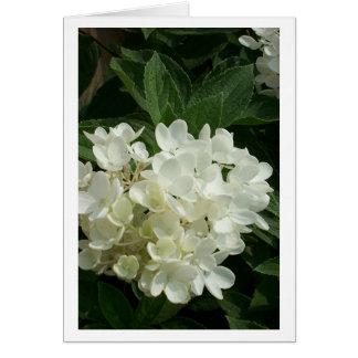 Blank Hydrangea Card