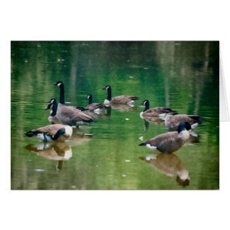 Blank inside Canadian Geese greeting card