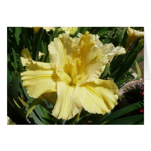 "Blank Iris Card -""LEMON SORBET"""