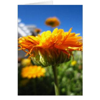 Blank Marigold Greeting Card