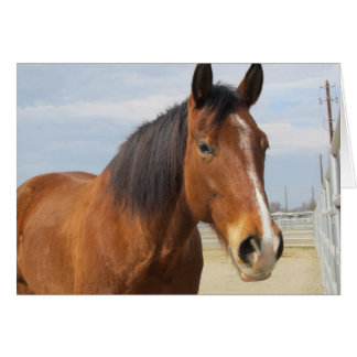 Blank Note Card--Brown Horse Side