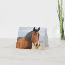 Blank Note Card--Brown Horse Side Card