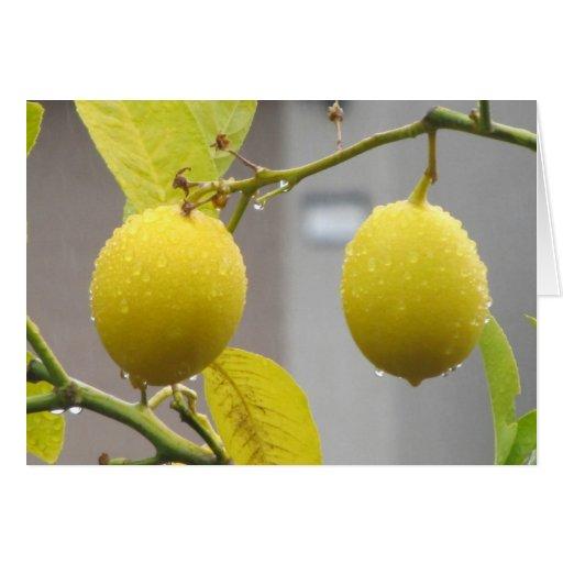 Blank Note Card -- Lemons